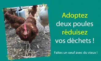 Opération adoption de poules